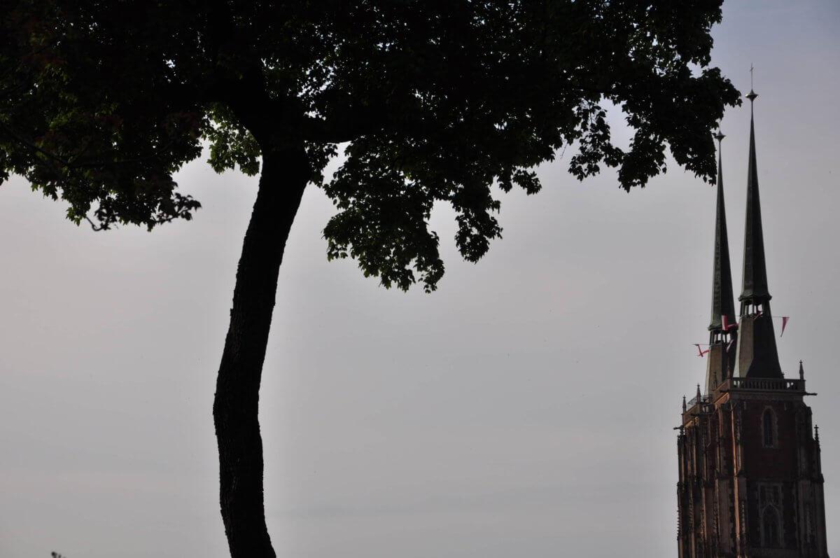 Między wiśniami, między słowami, między ciszą a ciszą – zapiski z hamaka  Magdalena Podobińska
